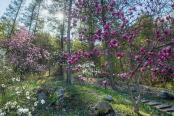 Melody of Magnolia, Jade Garden, South Korea