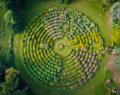 The Miz Maze at Mount Ephraim Gardens
