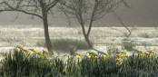 Narcissus in the Fog