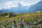 Nature's Planting Scheme