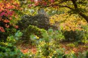 October Evening in RHS Wisley