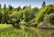 Lush vegetation around the lake.