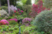 Spring in a Hillside Garden