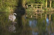 Swan Sculpture