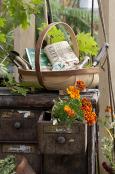 Cabinet planter