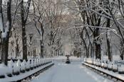 Winter Wonderland in Central Park