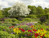 A Riot of Spring Colour at RHS Wisley