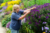 Tending to the Herbaceous Border, Waterperry