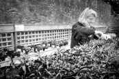 Gardener at Work, Garden Centre, Waterperry