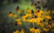 Windy flowerbed