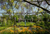Waterperry Wisteria Arch