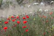 wild flower meadow
