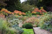 Rhus typhina autumn