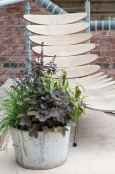 Using Herbs in a Contemporary Setting