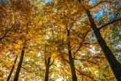 "The essence of ""golden Polish autumn"""