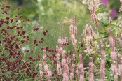 Sanguisorba and Persicaria