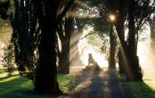 Tregrehan dawn