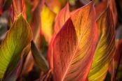 Foliage flames