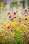 Late Summer, Sugnall Walled Garden