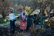 Pot heads at the allotment