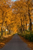 Golden autumn in Poland.
