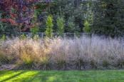 Autumn border covered by `Deschampsia caespitosa`