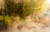October Mists