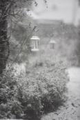 Snowy Eiderdown