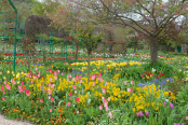 Springtime in Claude Monet's garden