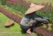 Head gardener weeding