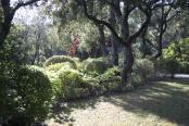 Shade in a Provencal Garden