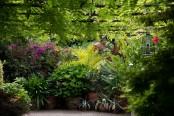 Tropical plants in pots