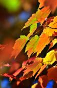 Autumn colour 08