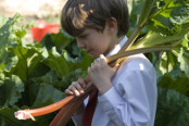 Boy with freshly picked rhubarb
