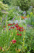 Colourful cottage garden
