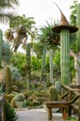 IGPOTY 'European Gardens' Awards, February 2019. Giardini Ravino