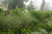 Foggy Summer