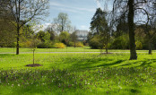 Kew: The Essence of Spring