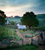 Gardening at First Light