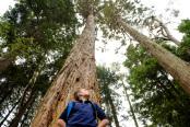 Boy vs giant redwood