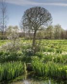 Dorset country garden