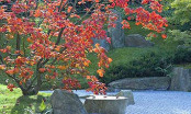 Japanese Garden at Garden of the World - Berlin
