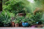 Oakwood pots, Wisley