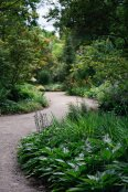 The quiet path, Oakwood