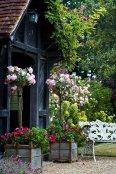 Roses round the door