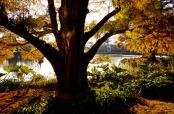 Autumnal Hues at Kew