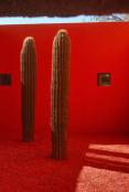 Martha Schwartz Art or garden?