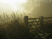 misty december walk