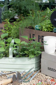 Mixed herbs and trug