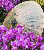 Orchids and oriental umbrella